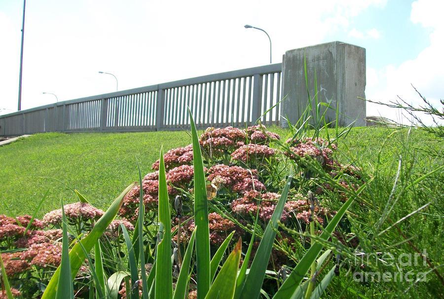 Wildflowers Beside The Bridge Photograph