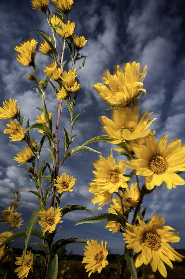 Wildflowers Blooming On The Kansas Photograph