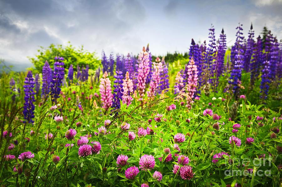 Flowers Photograph - Wildflowers In Newfoundland by Elena Elisseeva