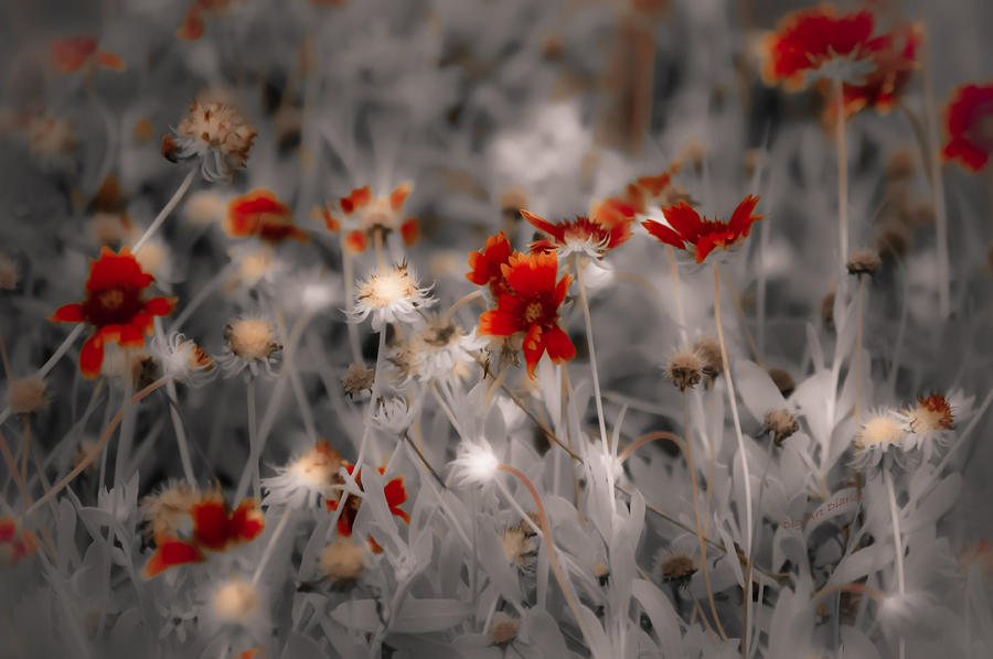 Wildflowers Of The Dunes Photograph