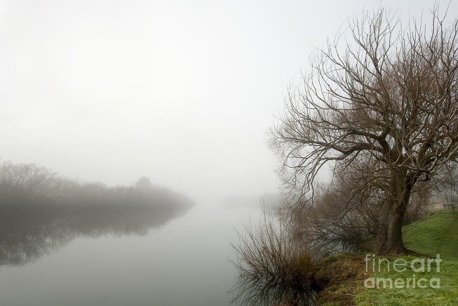 Willow In Fog Photograph  - Willow In Fog Fine Art Print