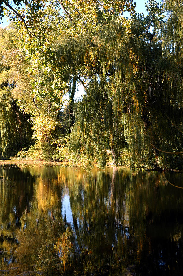 Willow Mirror Photograph  - Willow Mirror Fine Art Print