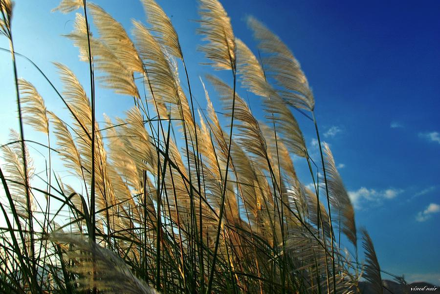 Photograph - Wind by Vinod Nair