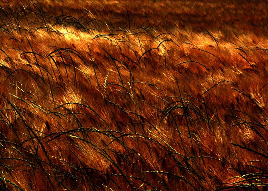 Windblown Photograph