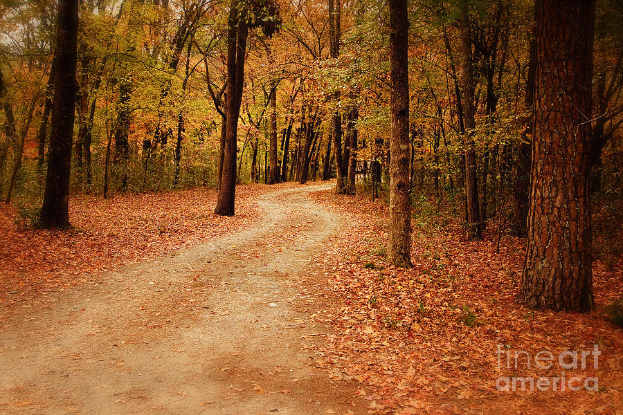 Winding Path Photograph  - Winding Path Fine Art Print