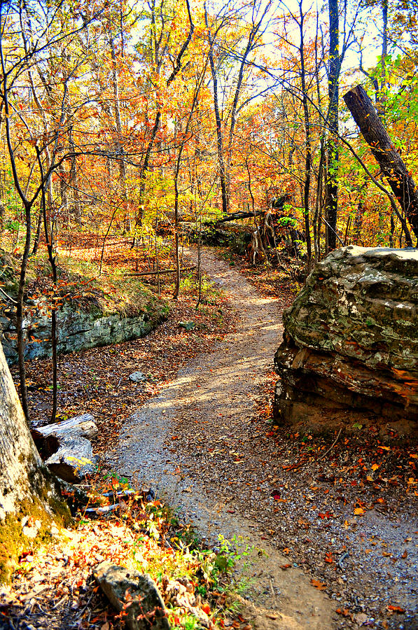 Winding Trail Photograph  - Winding Trail Fine Art Print