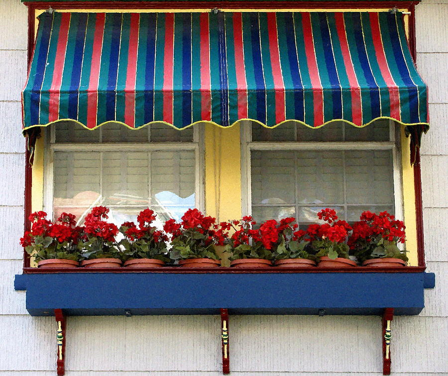 Window Box Geraniums Photograph  - Window Box Geraniums Fine Art Print