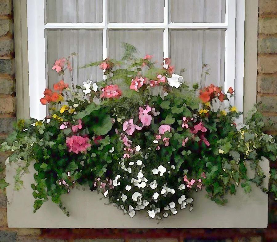 Flower Window Baskets : Window box of mixed flowers by elaine plesser