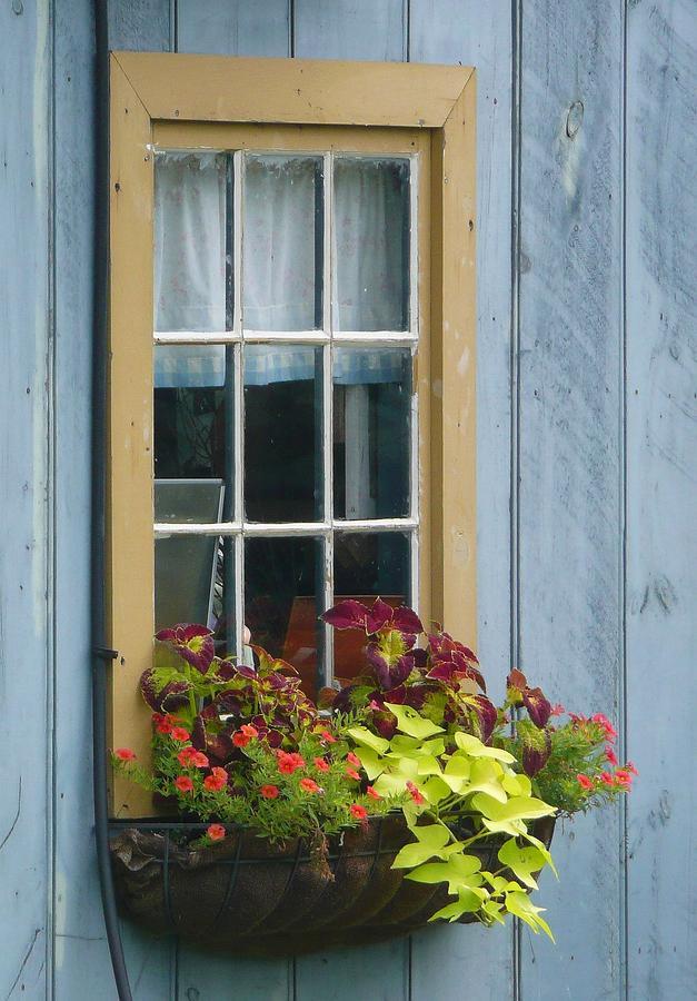 Flower Window Baskets : Window flower basket by lori seaman