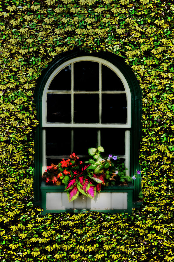 Window On An Ivy Covered Wall Photograph