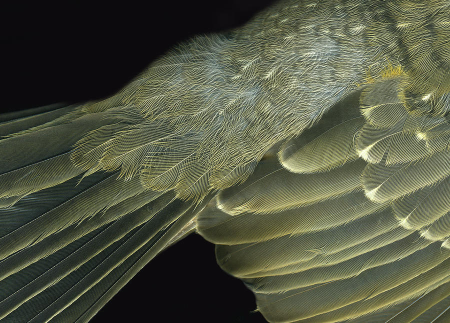 Winged Photograph