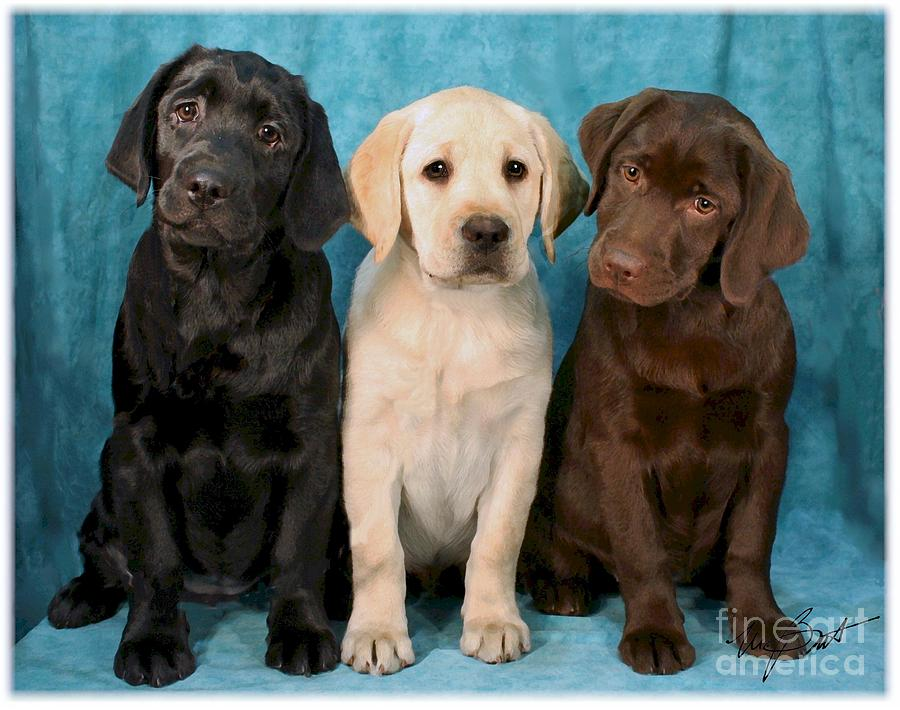 Winkin Blinkin And Nod  Lab Puppies Digital Art