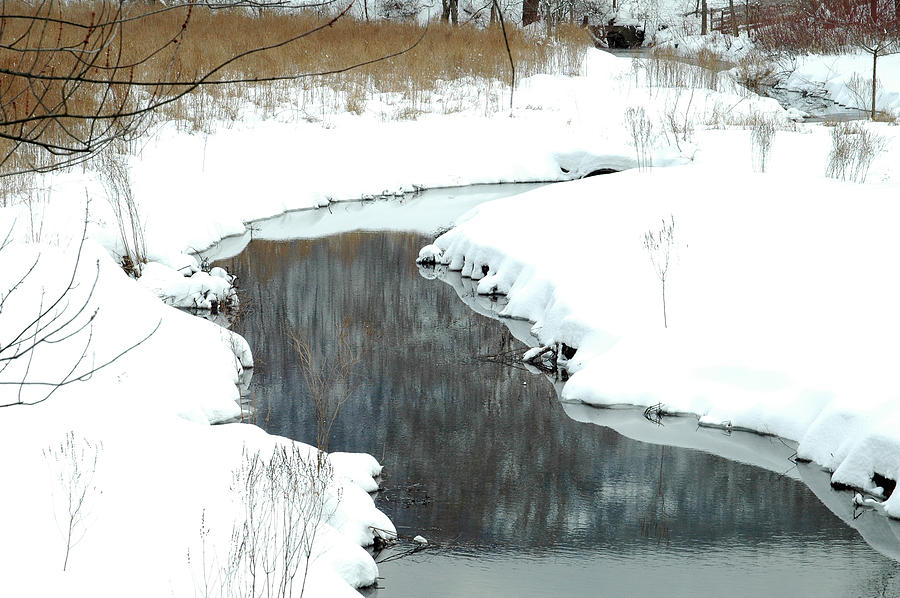 Winter Amber Stream Photograph  - Winter Amber Stream Fine Art Print