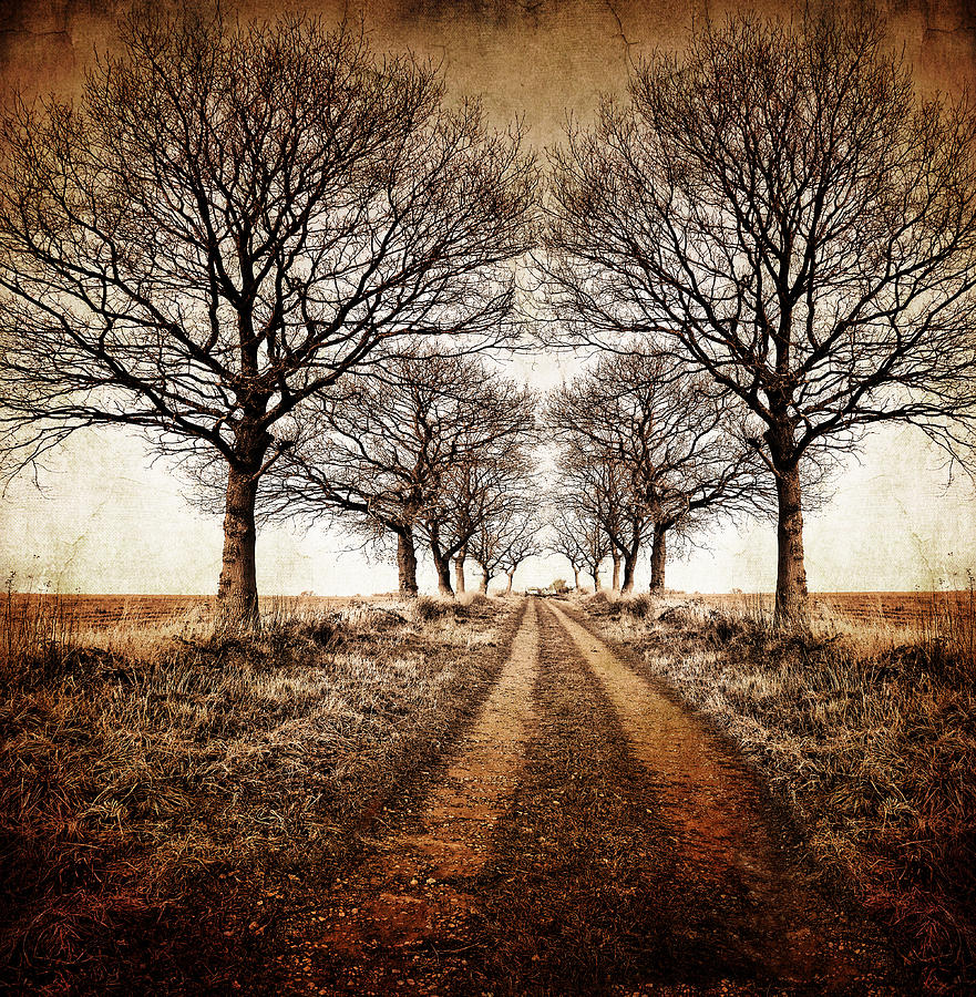 Winter Avenue Photograph  - Winter Avenue Fine Art Print