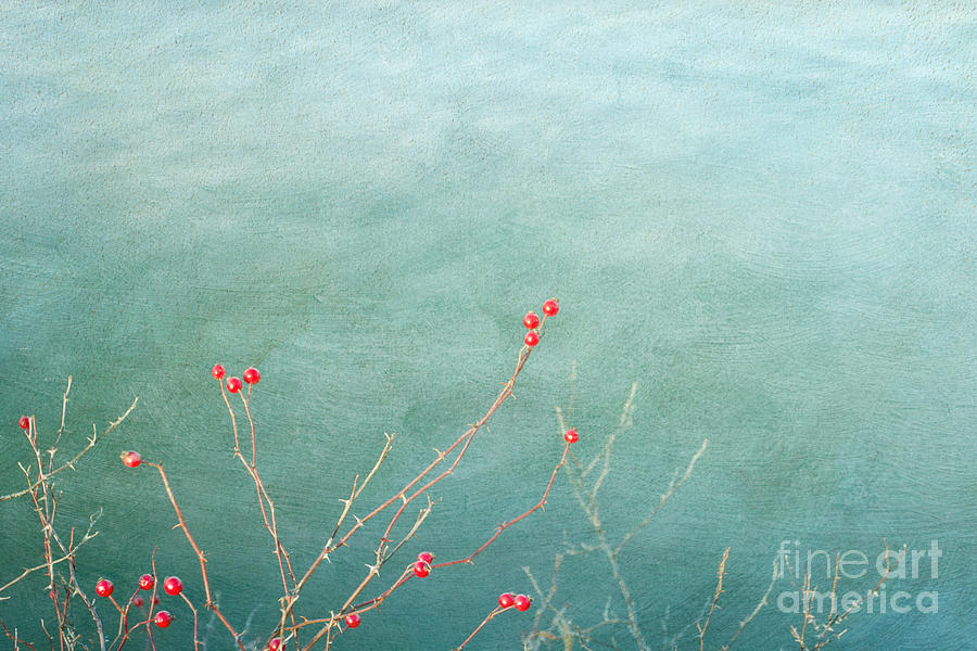 Winter Berries Photograph  - Winter Berries Fine Art Print