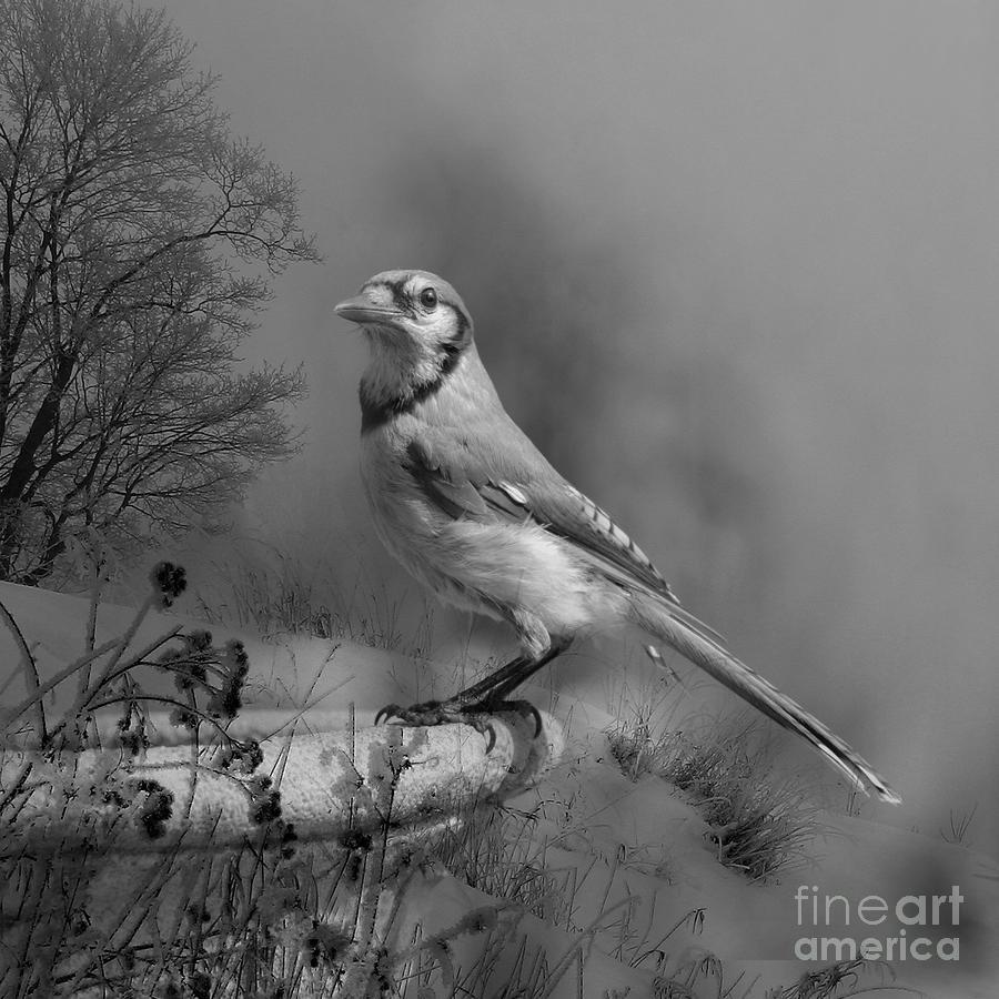 Winter Bird Photograph