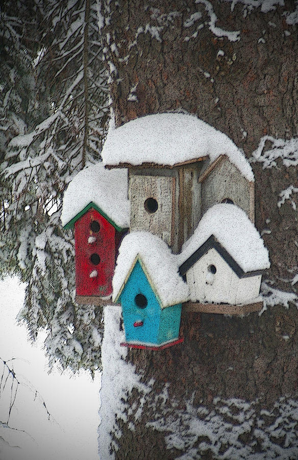Winter Birdhouses Photograph 