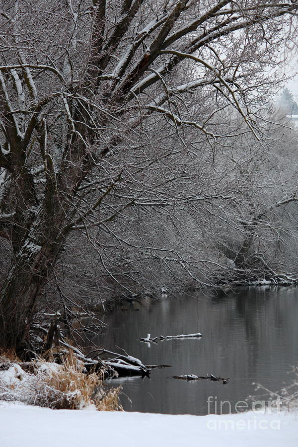Winter Calm Photograph  - Winter Calm Fine Art Print