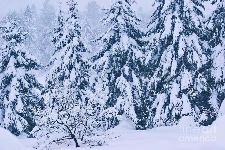 Winter Coat Photograph  - Winter Coat Fine Art Print