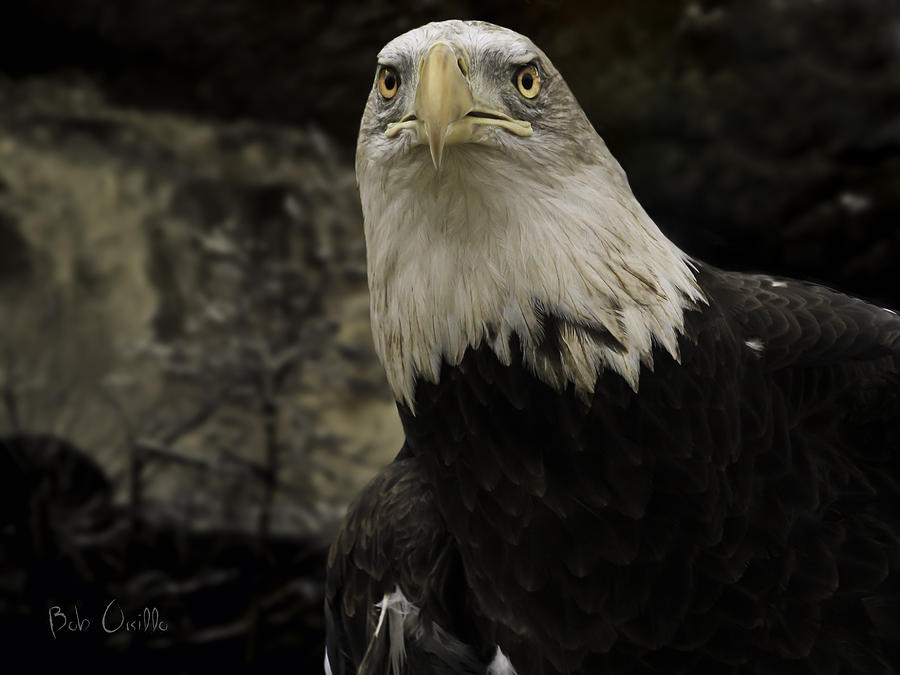 Winter Eagle Photograph  - Winter Eagle Fine Art Print