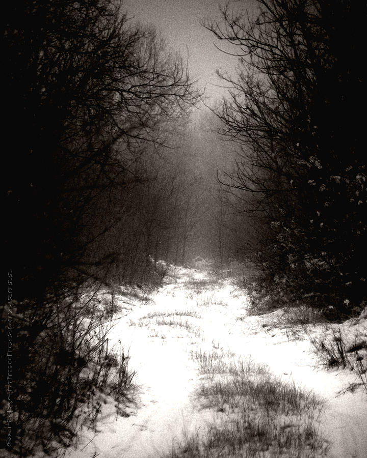 Winder Photograph - Winter IIi by Mimulux patricia no