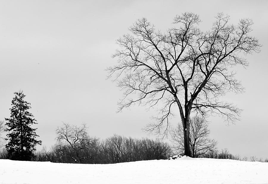 Black And White Photography Winter | www.imgkid.com - The ...