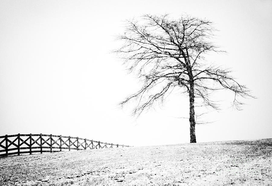 Black And White Landscape Photography Photograph - Winter In Black And White by David Waldrop