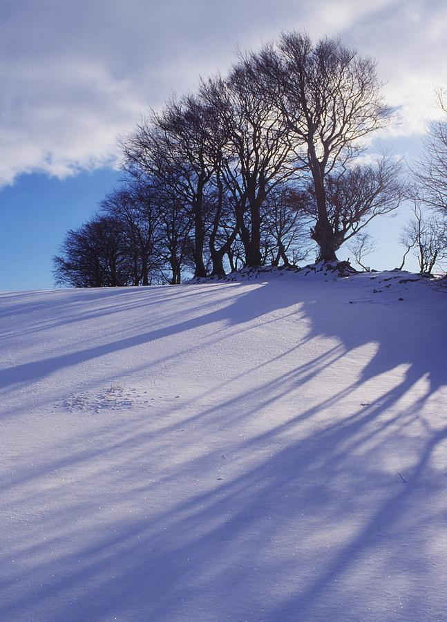 Beauty In Nature Photograph - Winter Landscape by The Irish Image Collection