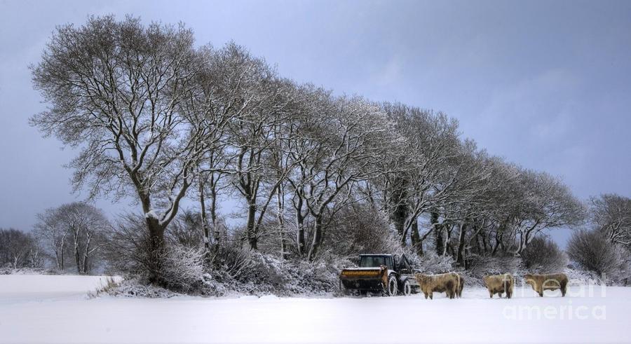 Winter Morning On The Farm Photograph