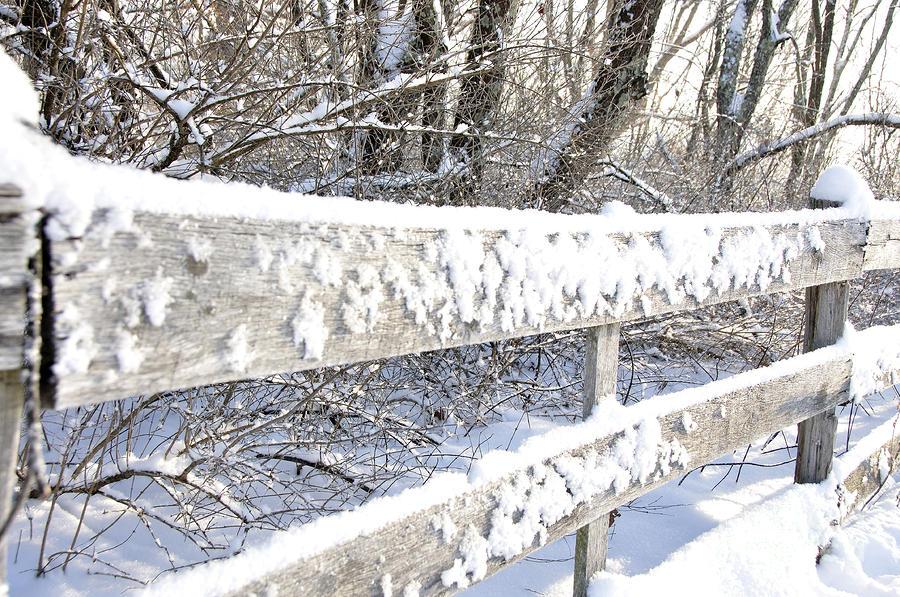 Winter Morning Photograph