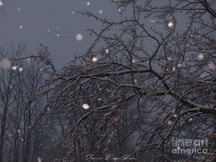 Winter Night Photograph - Winter Night by Sacred  Muse