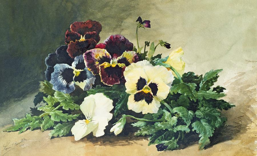Winter Pansies Painting  - Winter Pansies Fine Art Print