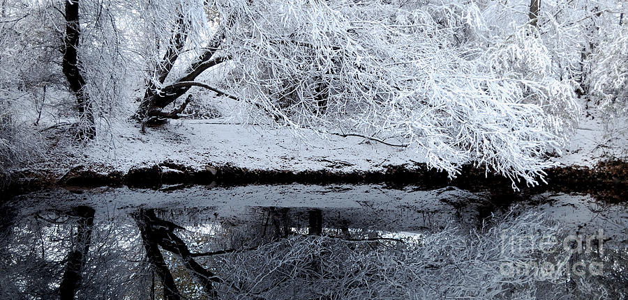 Winter Reflections Photograph  - Winter Reflections Fine Art Print