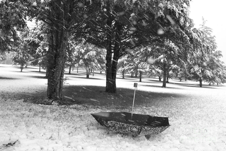 Winter Silhouette Photograph