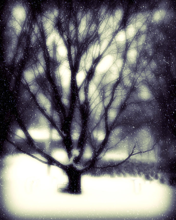 Winter Tree 3 Photograph  - Winter Tree 3 Fine Art Print