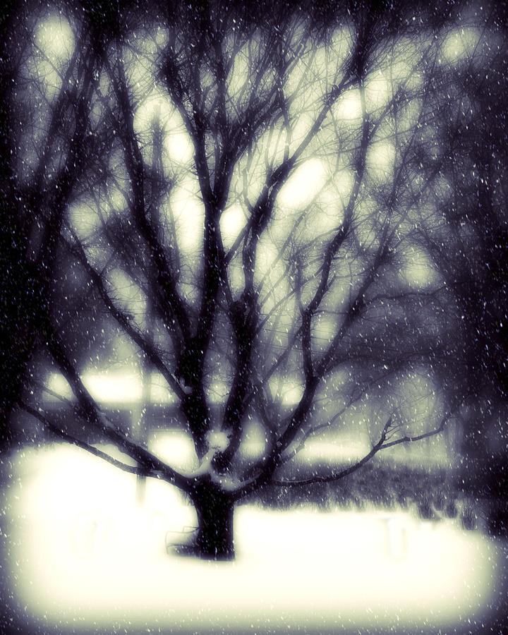 Winter Tree 3 Photograph