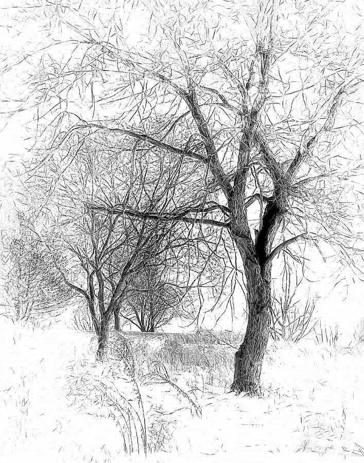 Winter Tree In Field Of Snow Sketch Digital Art