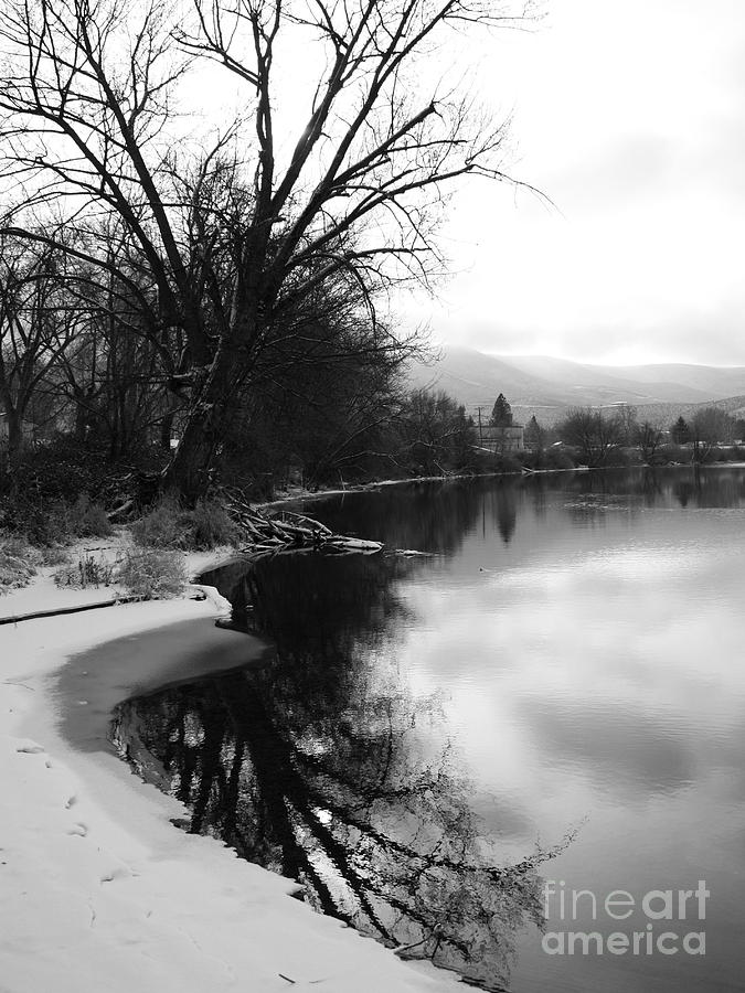 Winter Tree Reflection - Black And White Photograph