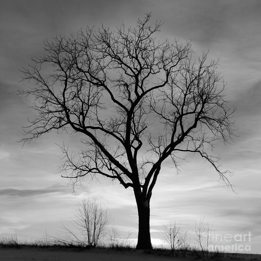 Winter Tree Silhouette Stock Images, Royalty-Free Images ...
