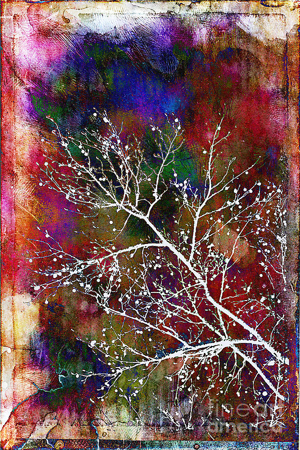 Winter Wishes Photograph  - Winter Wishes Fine Art Print