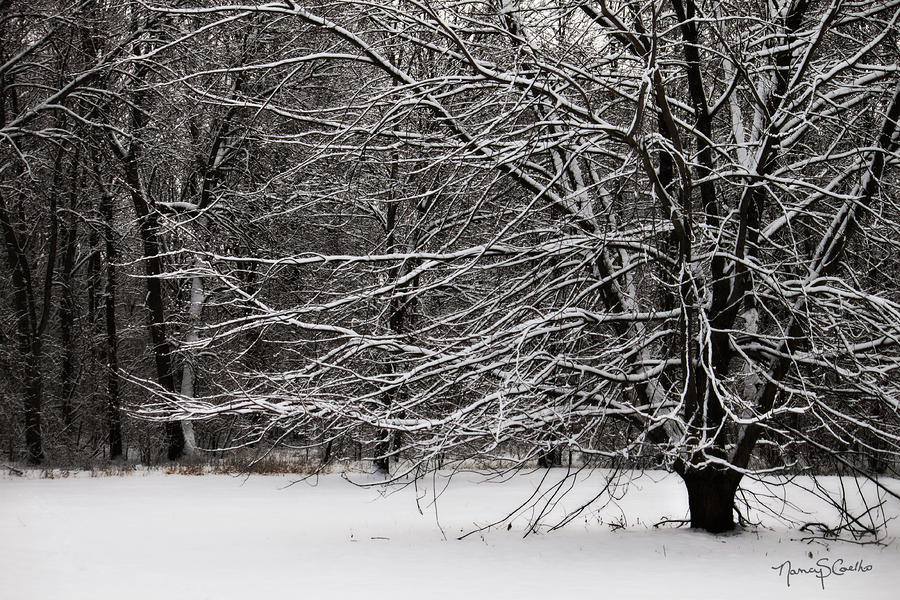 Winter Wonderland Photograph  - Winter Wonderland Fine Art Print