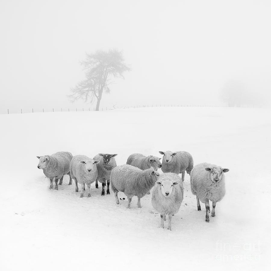 Winter Woollies Photograph