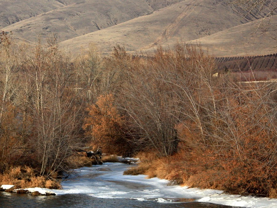 Winter Yakima River With Hills And Orchard Photograph  - Winter Yakima River With Hills And Orchard Fine Art Print