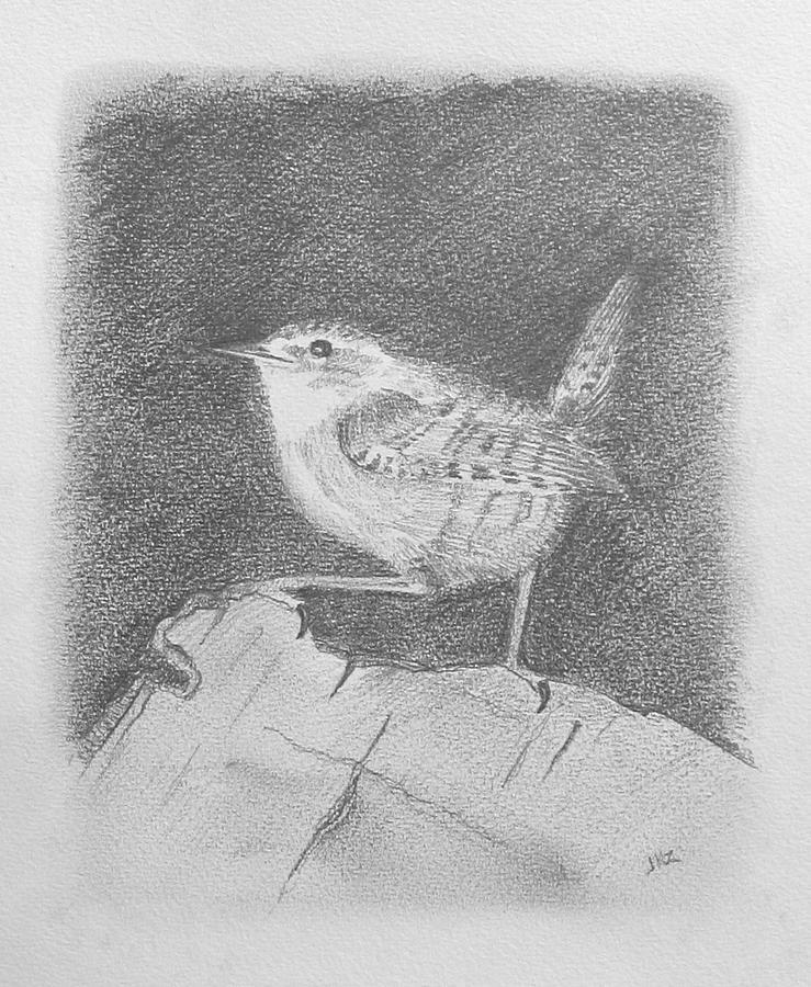 Wren Drawing - Winterkoning Wren by Michael Zonneveld