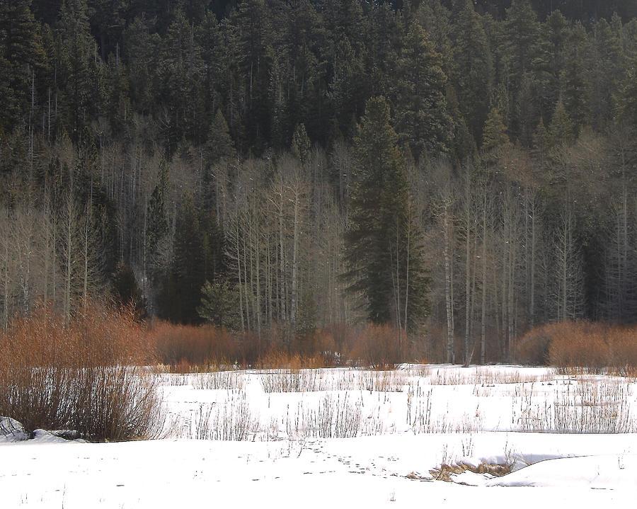 Winters Grip Photograph