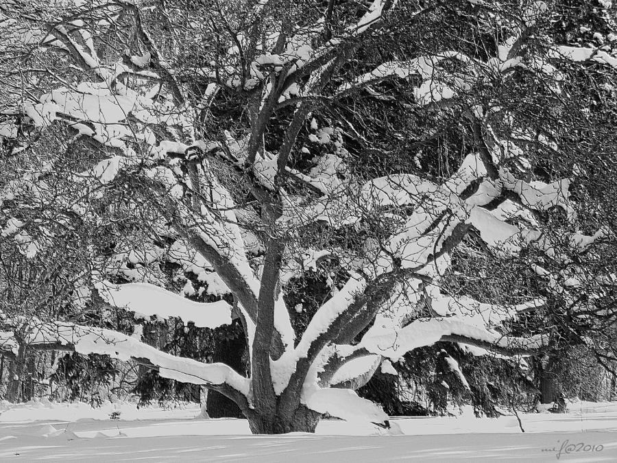 Winterscape After Snowy Night In London Photograph  - Winterscape After Snowy Night In London Fine Art Print