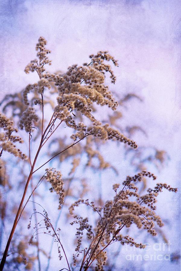 Wintertime Photograph