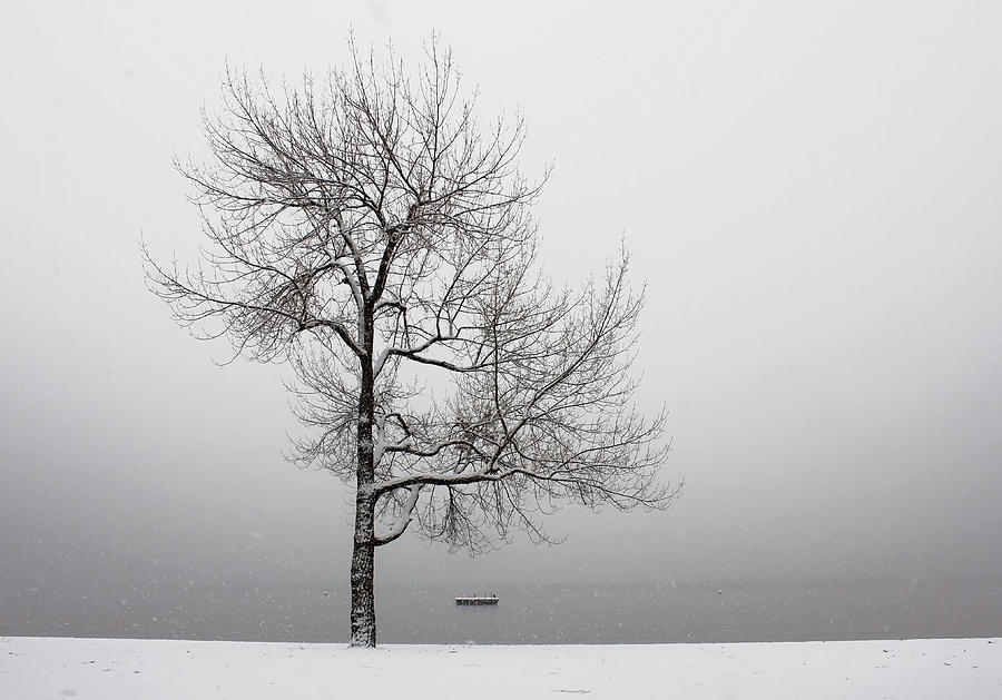 Wintertrees Photograph