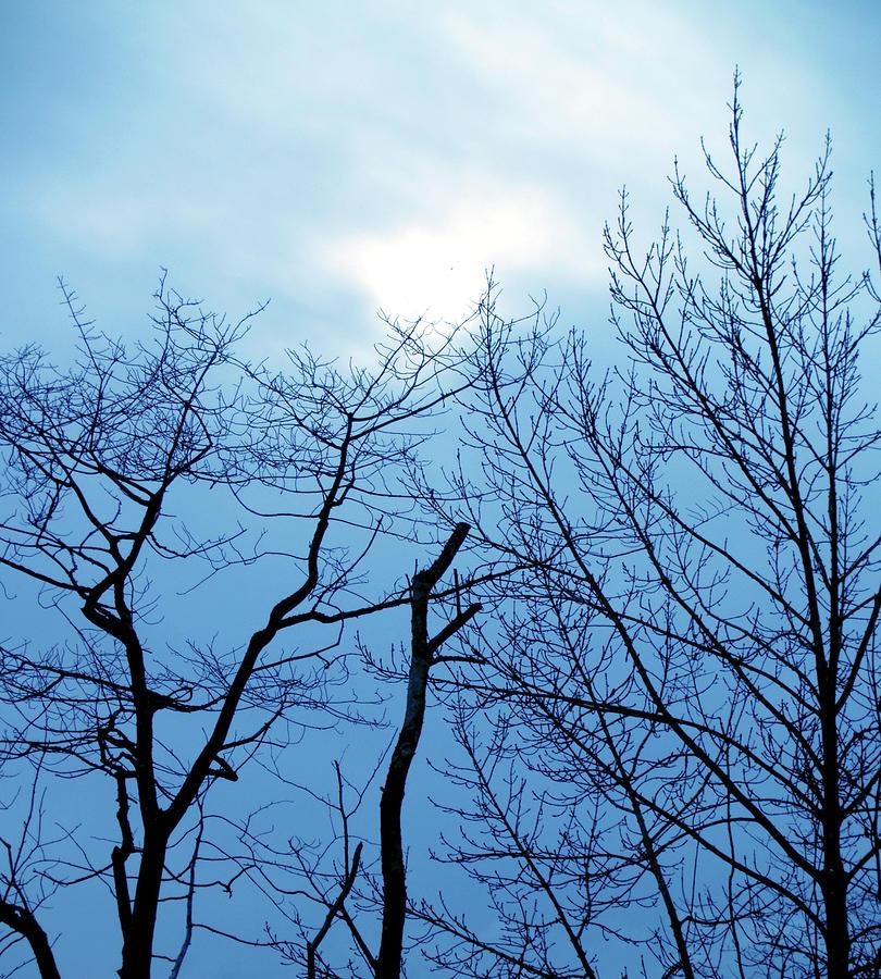 Wintertrees3 Photograph