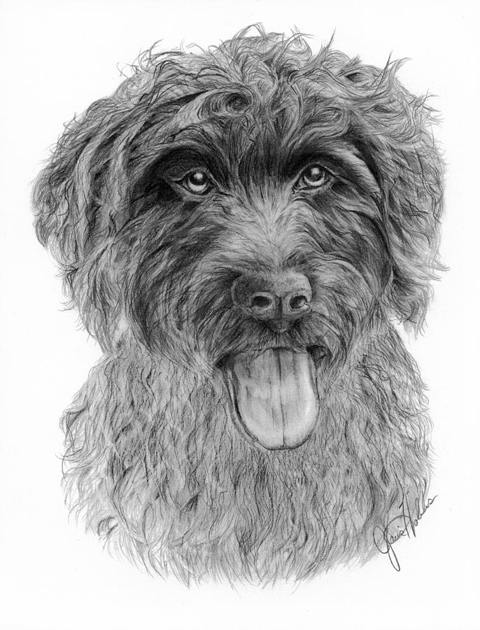 Wirehaired Pointing Griffon Drawing